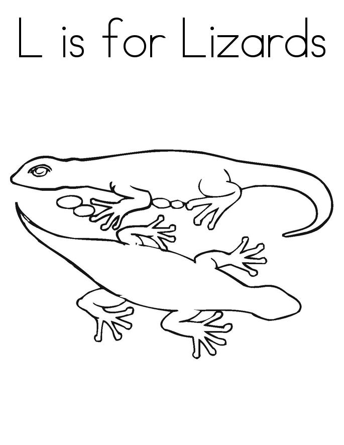 Lizard Coloring Image