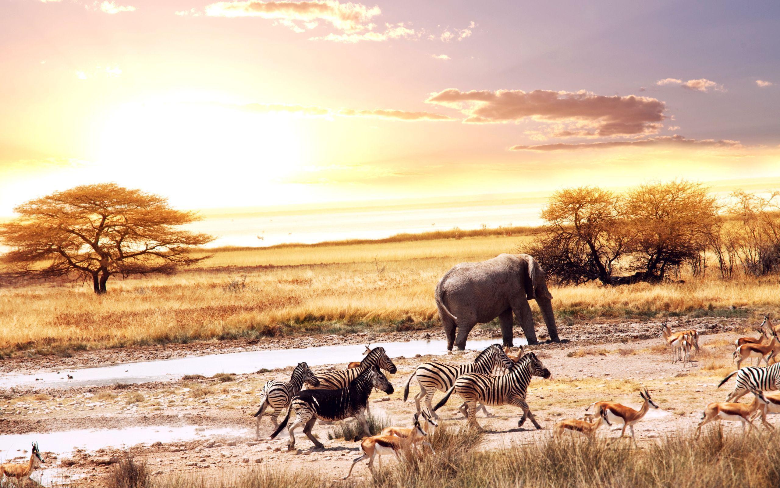 Africa Wallpapers Wallpaper (с изображениями) | Животные, Слоны, Обои зебра