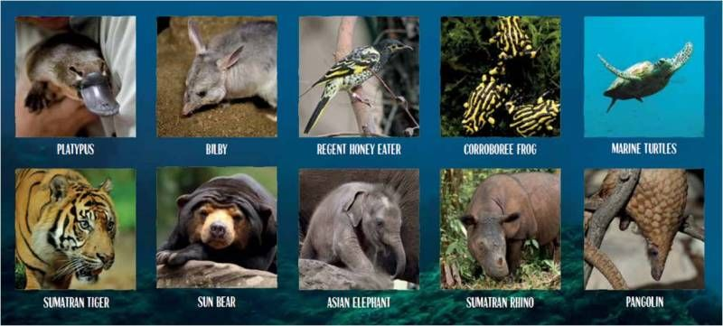 Taronga 10 - Analysis of endangered Asian and Australian animals, their habitats, impacts and environments. This site also contains lesson plans for stage 3/year 6 including projects to help raise funds for the promotion and conservation of endangered animals. Action learning at its finest! For further information, see https://taronga.org.au/sites/tarongazoo/files/workshop-resources/Taronga%2010%20Schools%20for%20the%20Wild%20Unit%20of%20Work_0.pdf