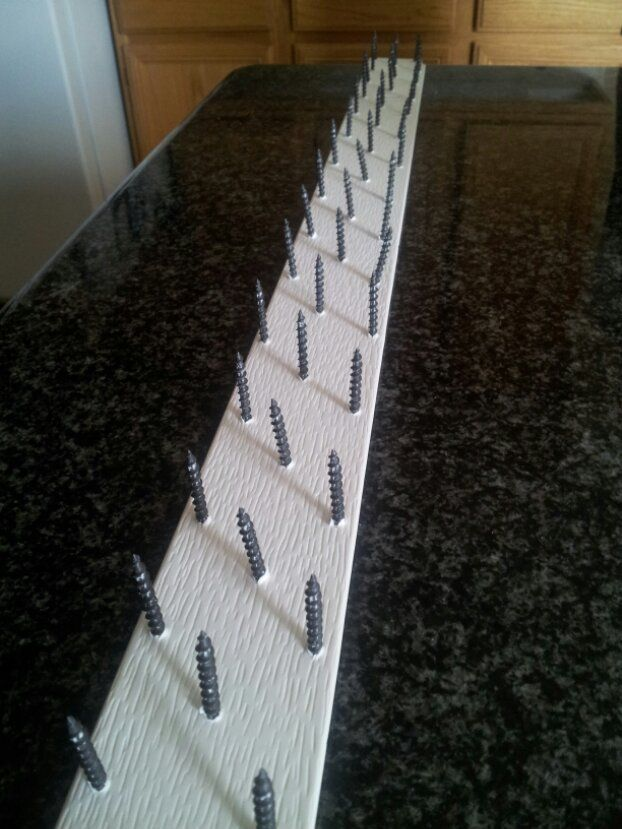 Homemade bird spikes, pigeon proof. Perfect! I can make my ...