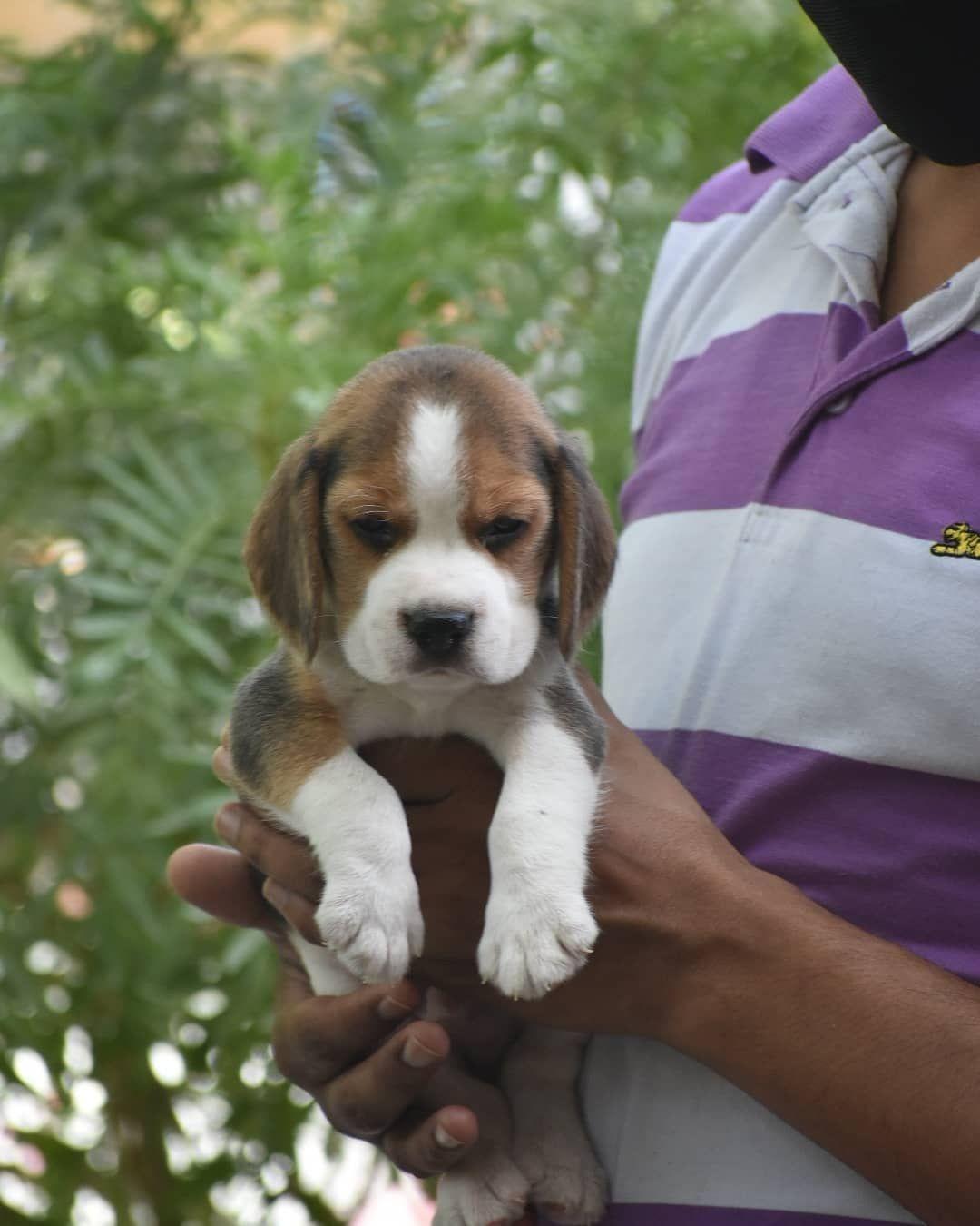 Pin On Pet Shops In South Delhi