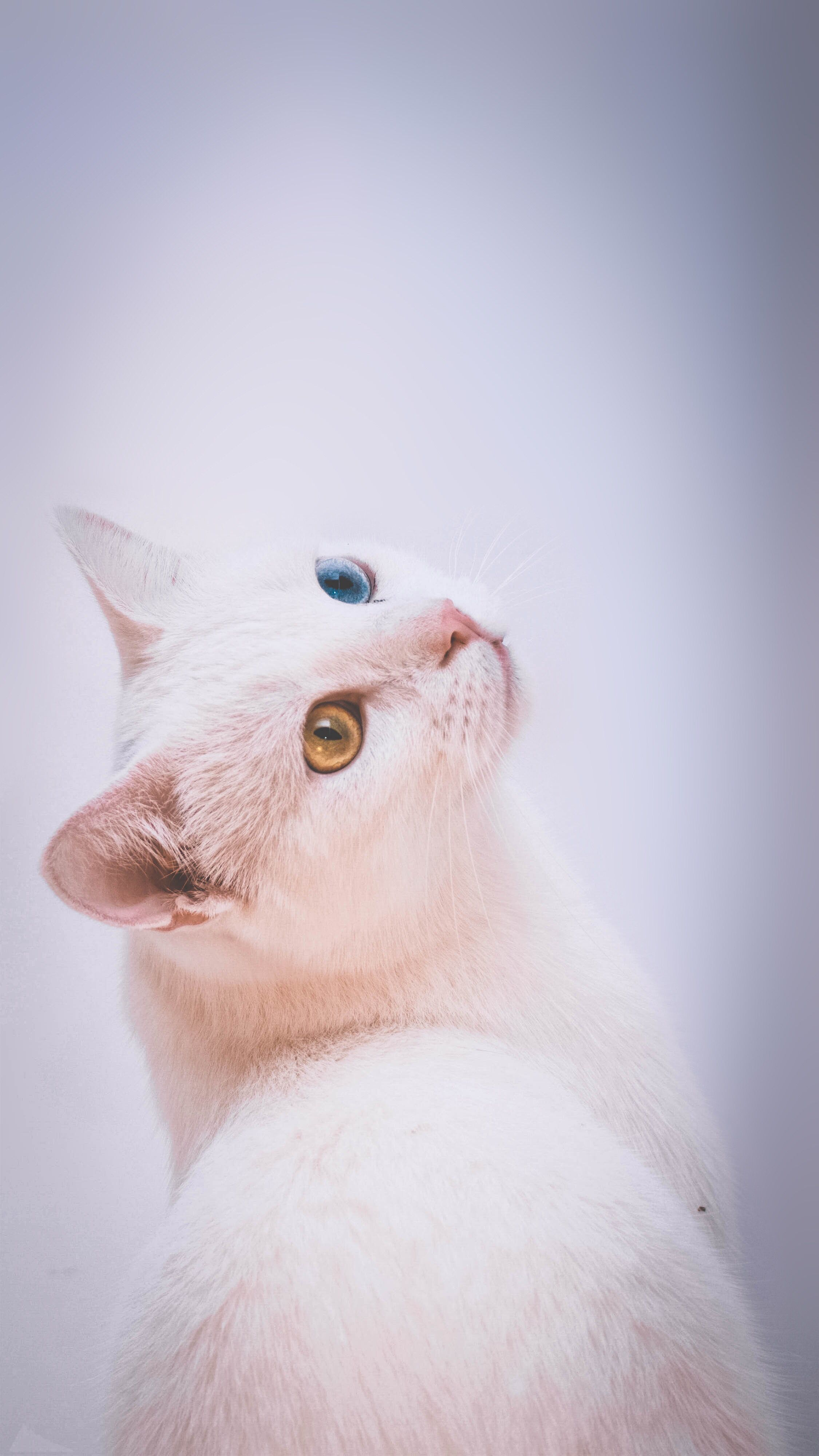 Cat Wallpaper For Phone 動物 かわいい ペット かわいい