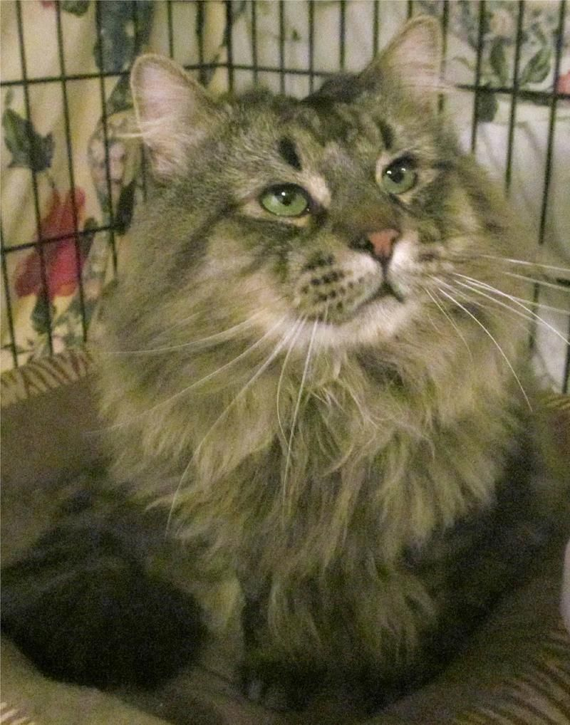 Pin On Adopt Me Animals In Need Of A Home From Mass Area Shelters
