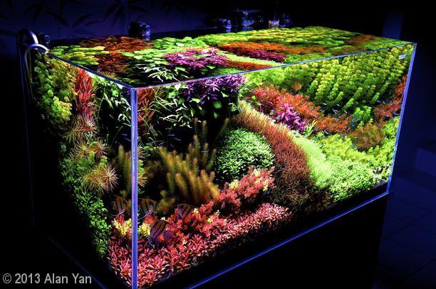 71 Dutch Style Ideas Planted Aquarium Aquascape Aquascape Aquarium