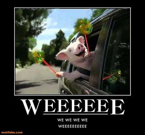 Weeeeeeeeee Little Geico Pig I Die Laughing Everytime I See This