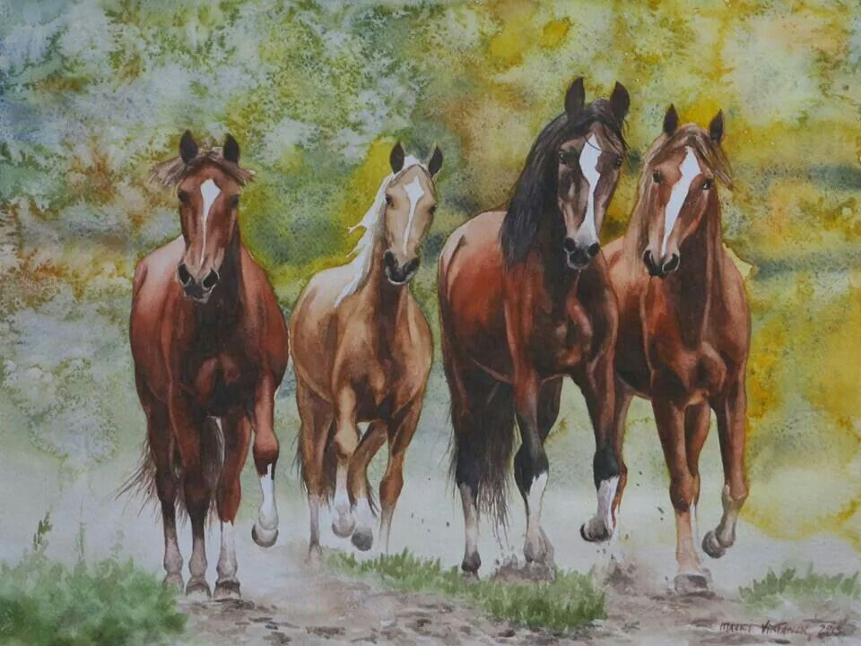 Four horses drawn in watercolour gallop happily in their leisure ...