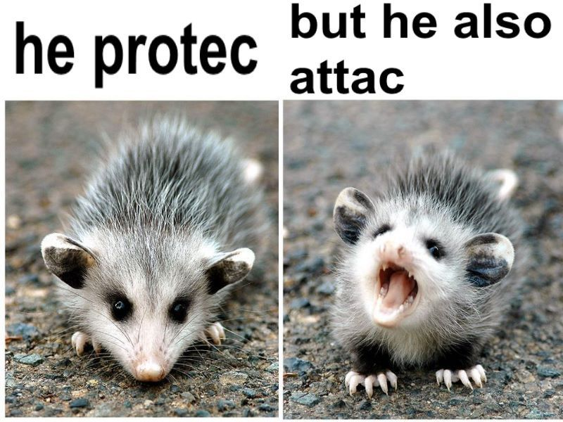 Pin By Starla Lane On Puns Pinterest Opossum Animals And Rodents