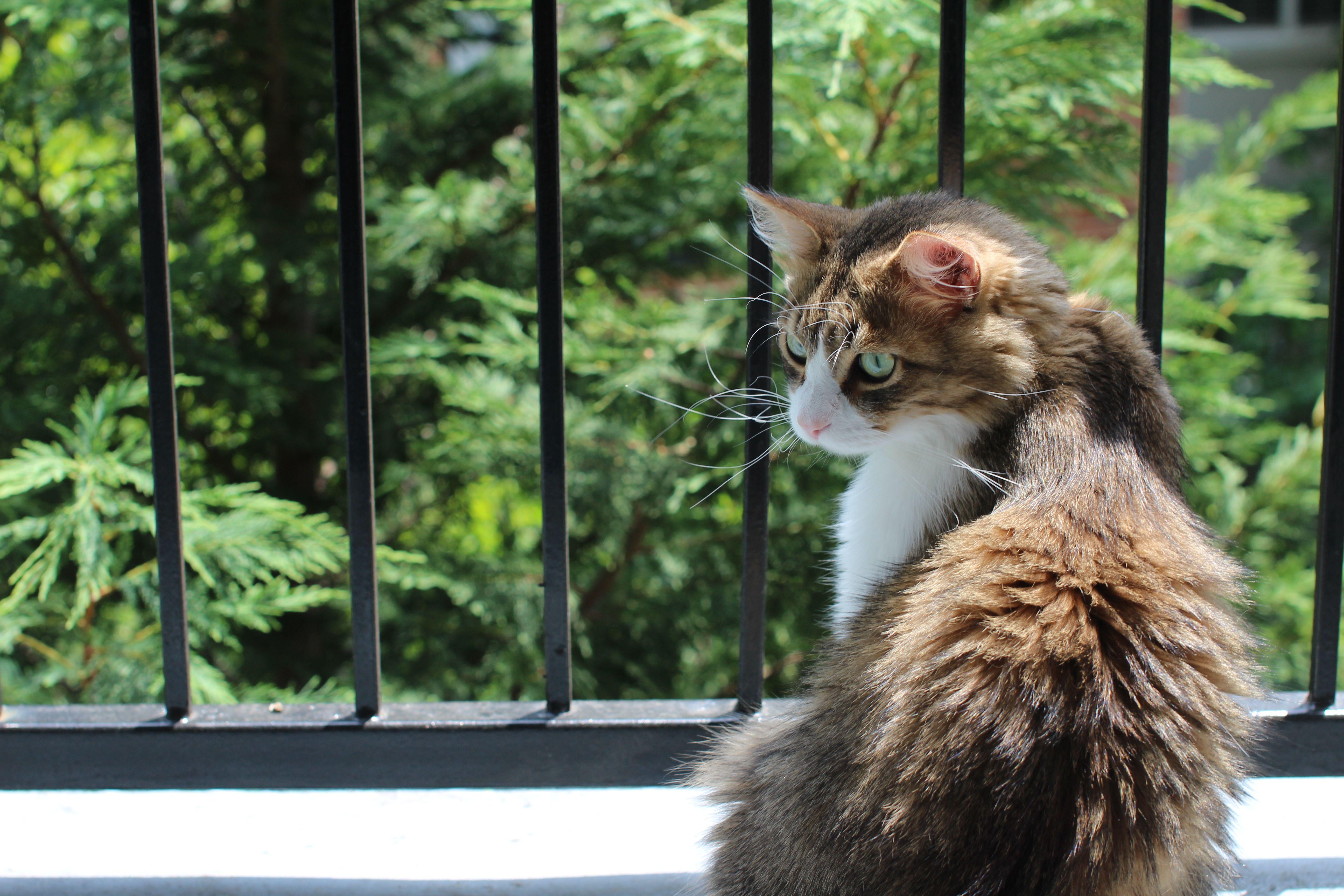 Happy Tabby Cat Cafe Atlanta, GA Cat cafe, Tabby cat, Cats