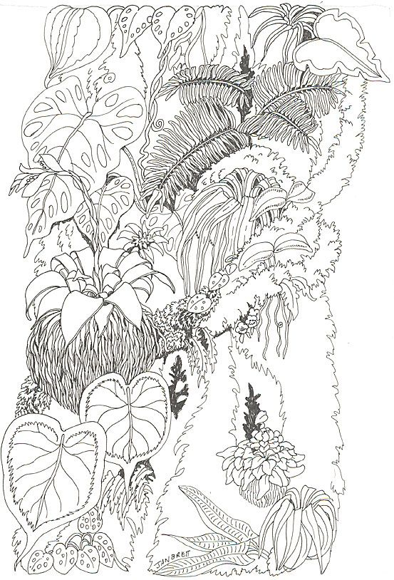 Forest Woods Coloring Page Trunk Coloring Page Regenwetter