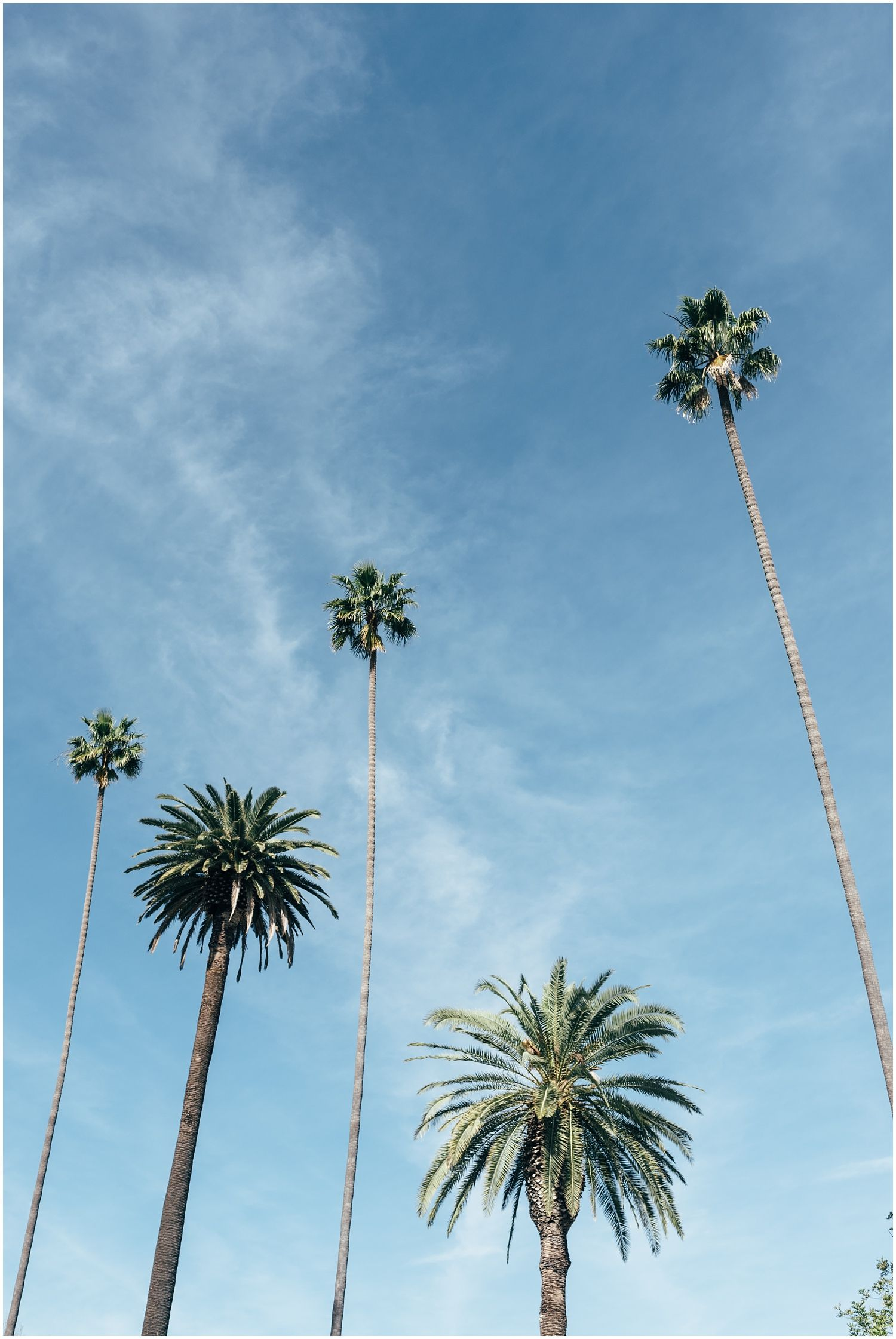 where to go in Los Angeles, LA, California  Voodoo Doughnuts, Alfred coffee and tea, Venice Beach, travel photography, palm trees, Runyon Canyon Park is part of Los angeles photography -