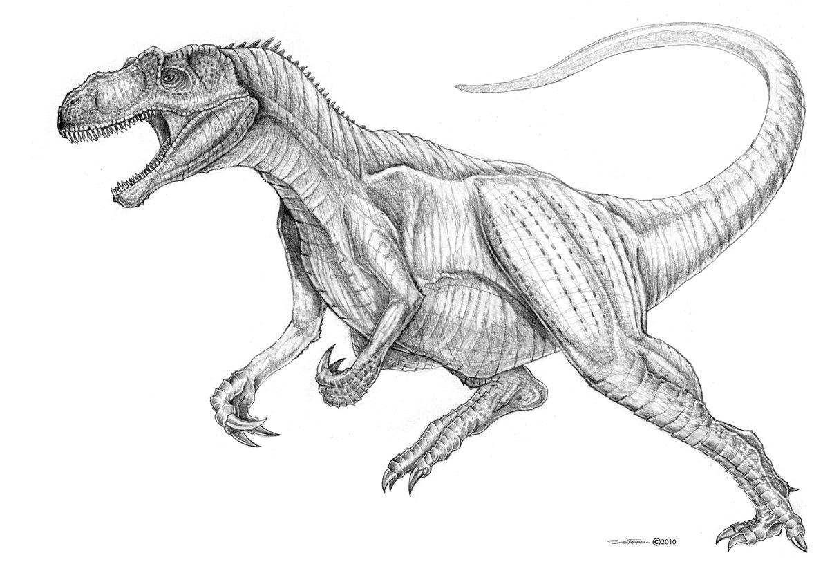 line drawings allosaurus coloring page new at minimalist