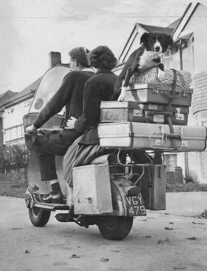 Vacanza con il cane anni 39 50 motorcycle vacation for Puntura vespa cane