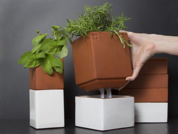 Growing Herbs Indoors From Cult Kitchen Farming, Evergreen Herb Pot Large    Cute Decor For