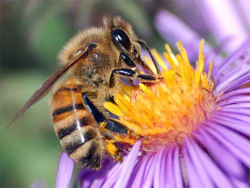 Significado de soñar con abejas - http://xn--significadosueos-kub.net/significado-de-sonar-con-abejas/