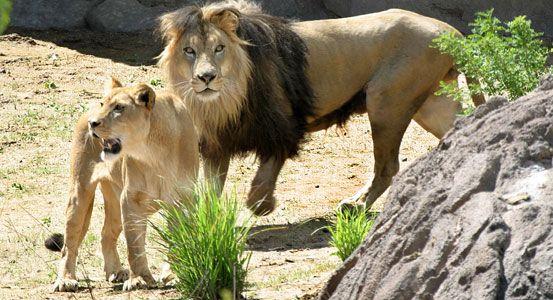 KidFriendly Denver Activities Denver zoo, Denver travel