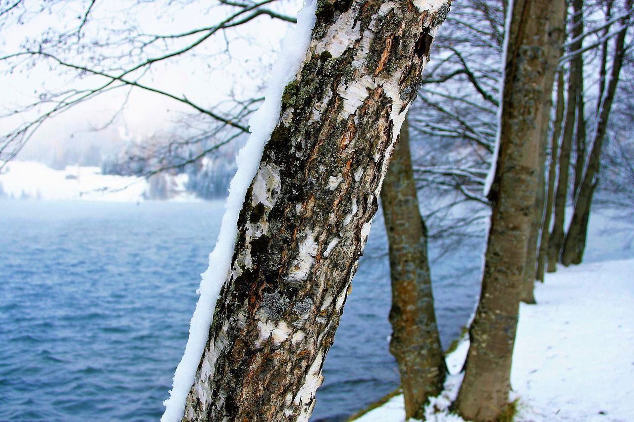 Free Image On Pixabay Winter Snow Lake Alpine Davos Frost