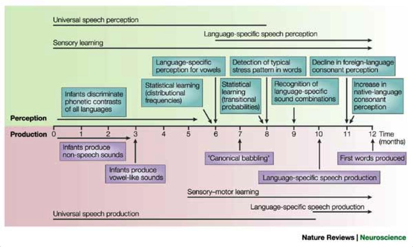 First Year Language Development Timeline