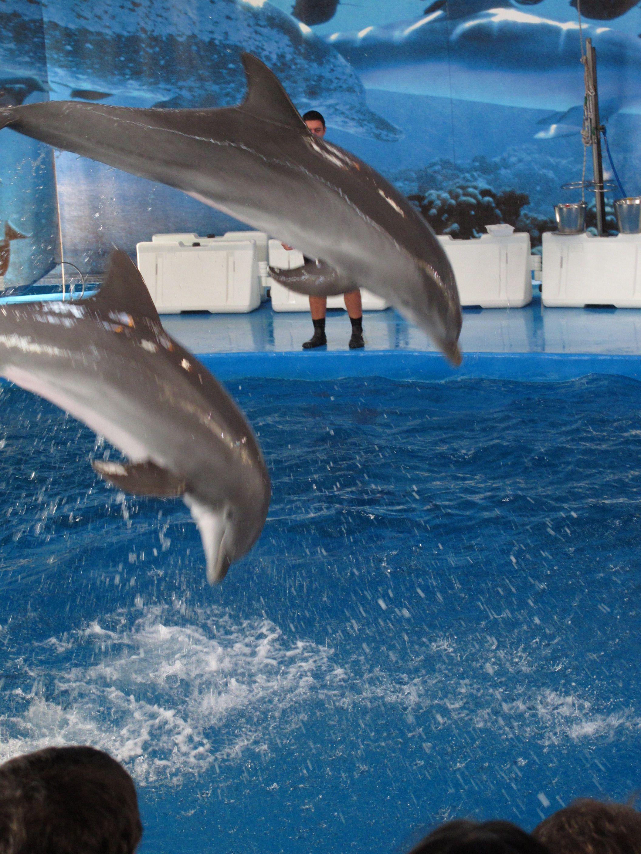 Dolphins Barcelona Zoo Pinterest