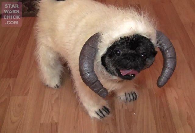 Wampa Pug Ferocious Wampug Cute Pugs Pugs In Costume