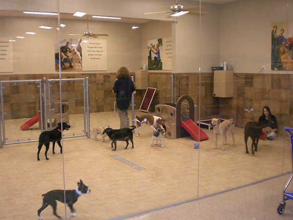 Best dog boarding daycare building for Best doggy day care