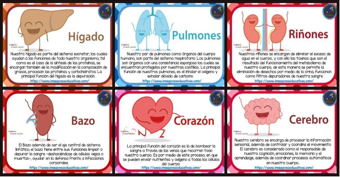 Tarjetas De Los órganos Del Cuerpo Humano Para Niños De Primaria Portada Organos Del Cuerpo Humano Cuerpo Humano Para Niños Sistema Del Cuerpo Humano