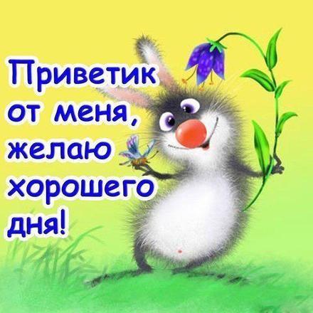 Открытка привет, приветик! Прикольный заяц! Зайка! Зайчик ...  Доброе Утро Мой Зайчик