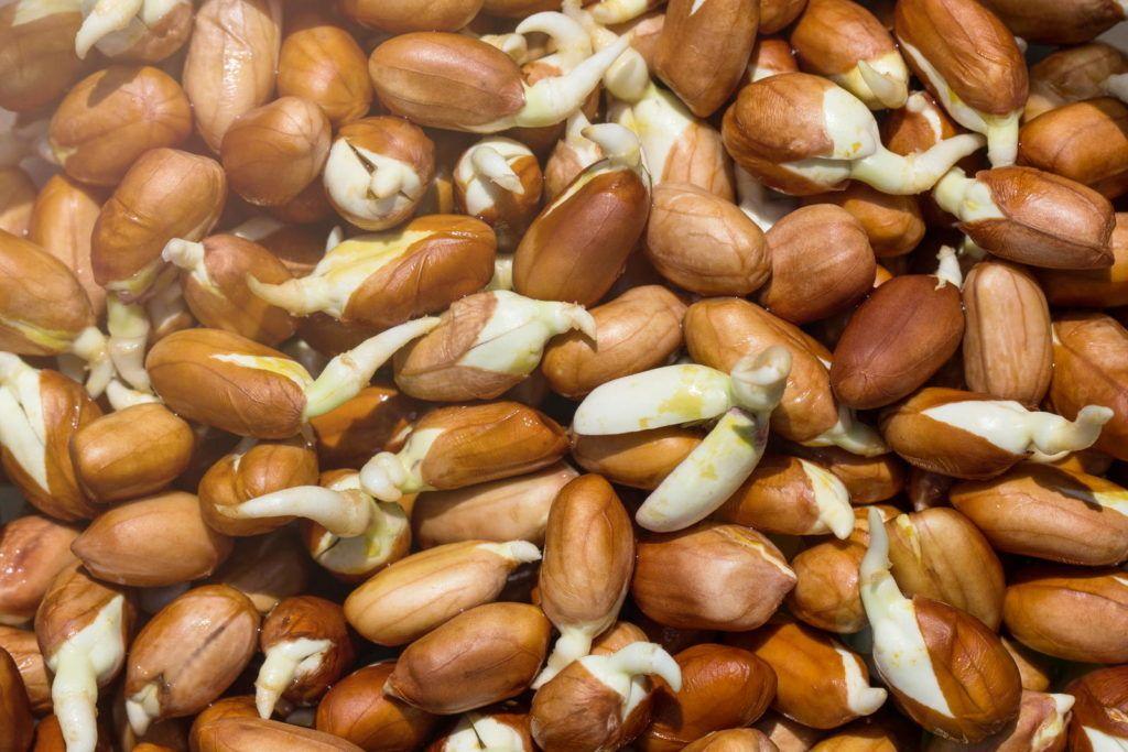 Erdnusse Anbau Pflege Der Erdnuss Im Eigenen Garten Plantura Erdnusse Pflanzen Gemuse Pflanzen Anbau