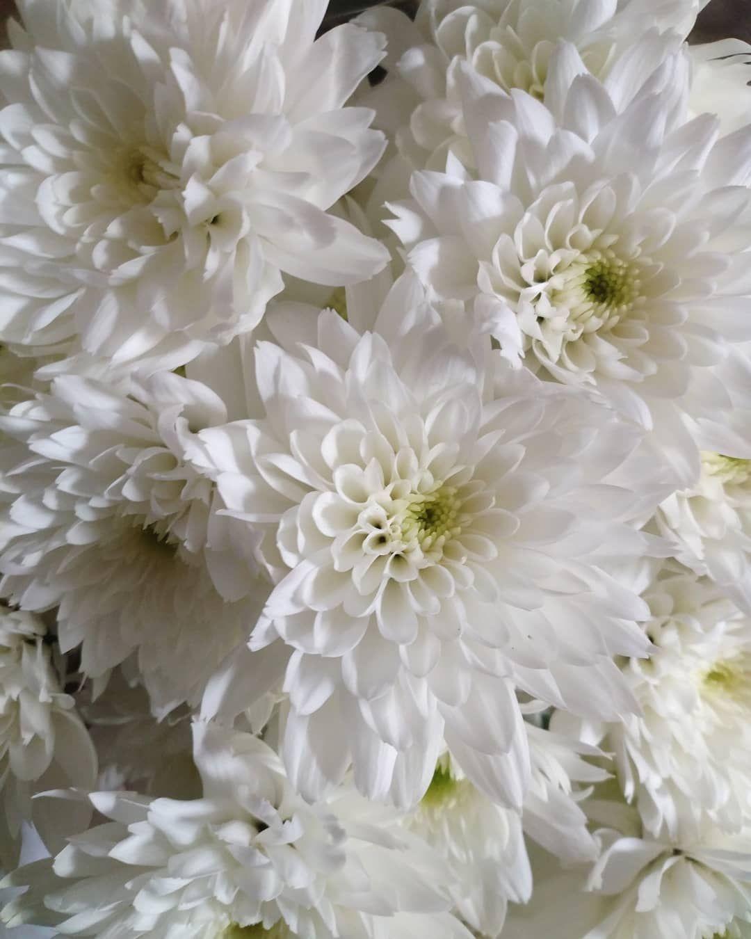 Oh my Grandma #flower #flowers #gift #presents #present #birthday #birthdayweekend #birthdayweek #birthdayfun #birthdaylove ##birthdaygirl #like #followme #sancarlino #whiteflowers #whiteflower #picofpic #picofday #photography #photooftheday #potd #instalike #instamoment #instagram #igers