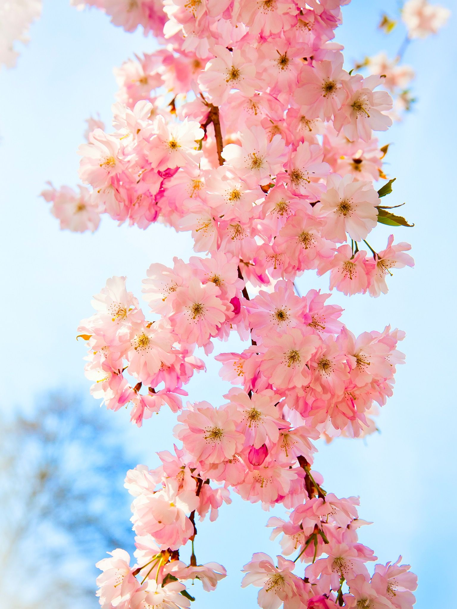 Pin by mckenna brown on flowers pinterest wallpaper and prints pink flowers in springtime wallpapers mobile wallpapers wallpapers mobile mightylinksfo