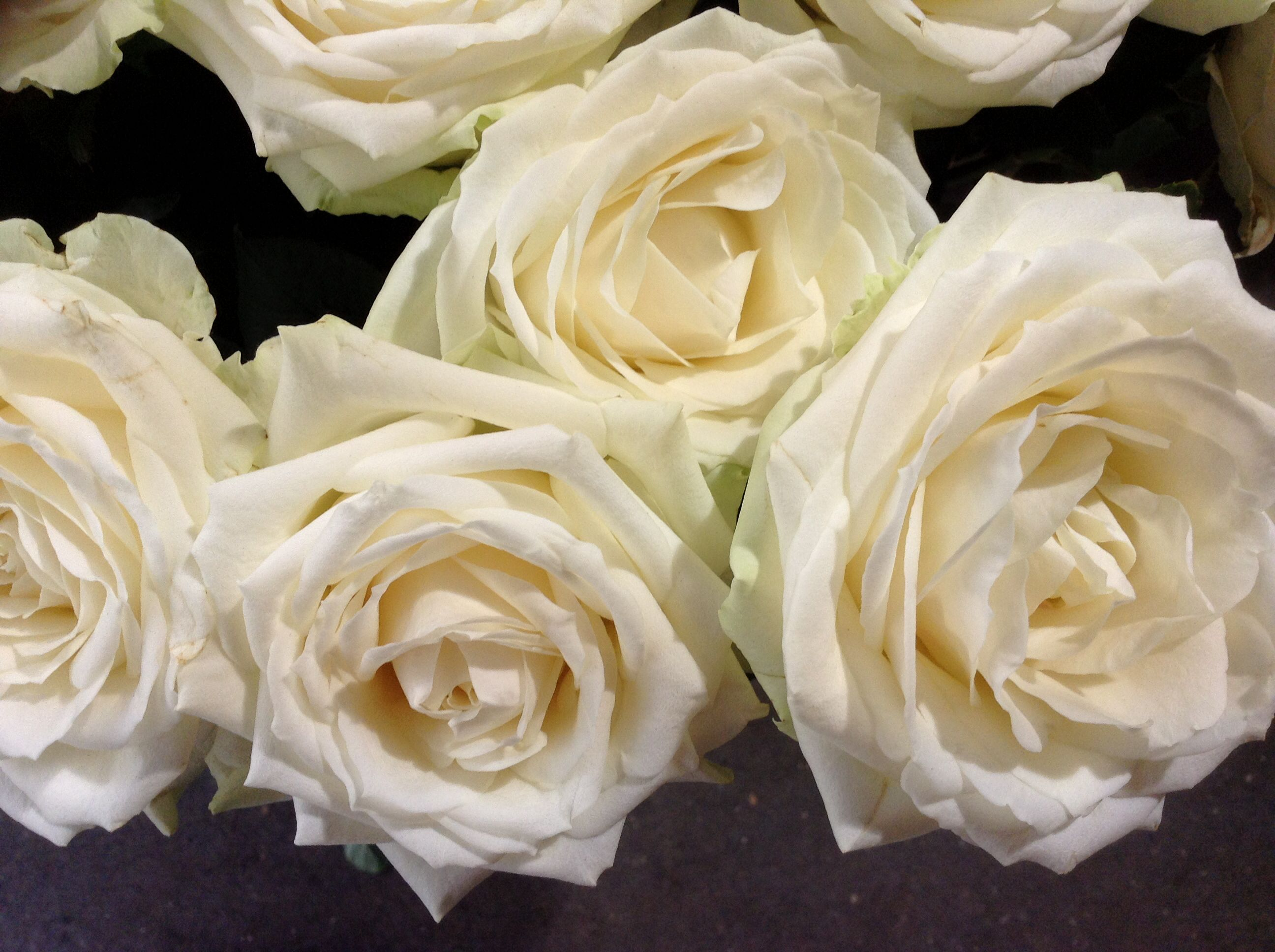 Just beautiful white roses flowers plants that i love