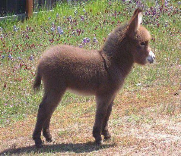 cute baby donkey <3