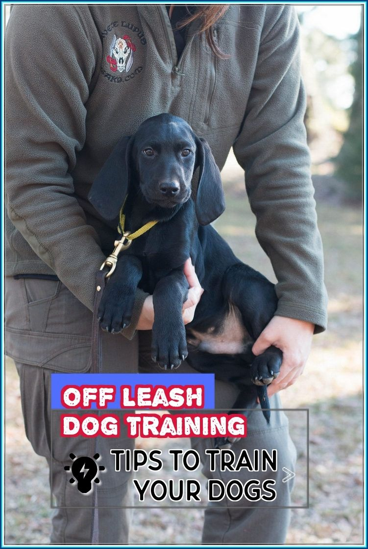 Learning More About Off Leash Dog Training Off Leash Dog