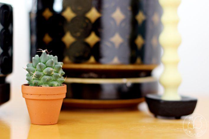 Oravanpesä   Kaktus Cactus
