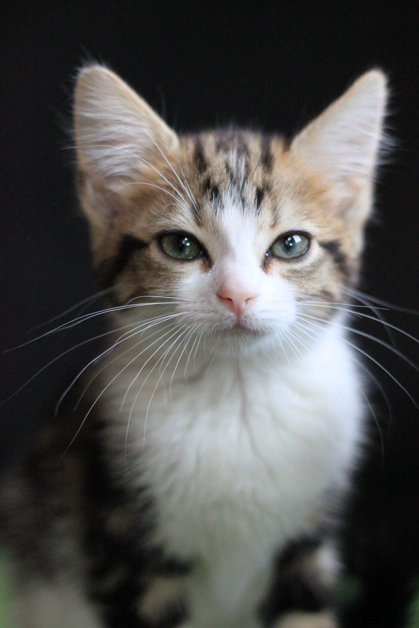 Belle Cats Cute Cats Beautiful Kittens