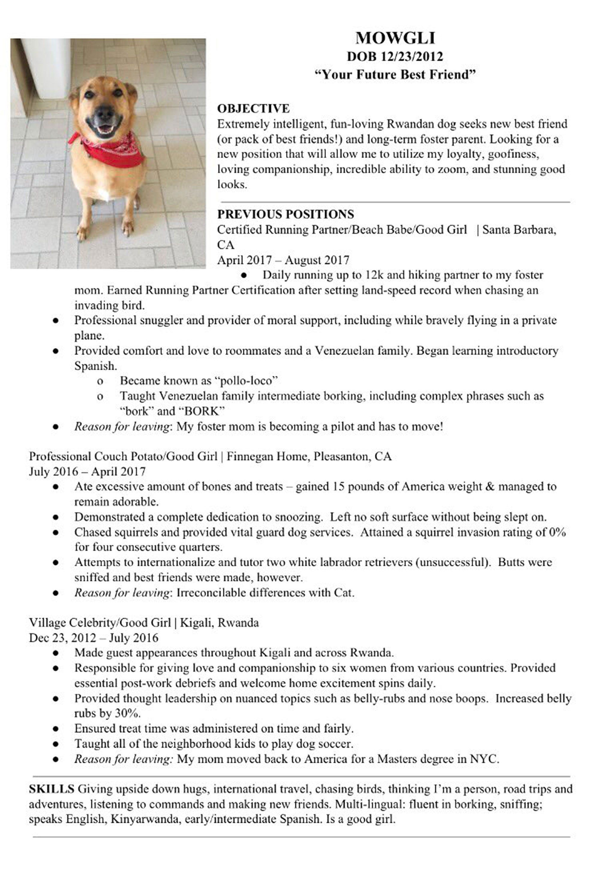 Man Creates Sweet Resume For Dog Mowgli Seeking A New Foster Family Foster Dog Animal Shelter Volunteer The Fosters