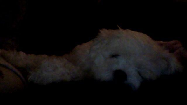 my baby puppy