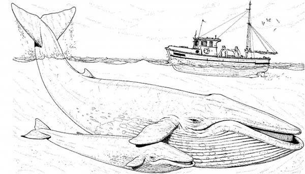 Fishing boat over two blue whale coloring page