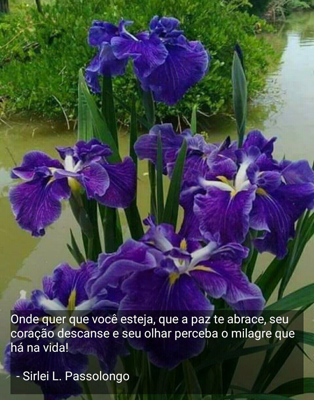 Boa Noite Com Imagens Flores Maravilhosas Imagens De Flores
