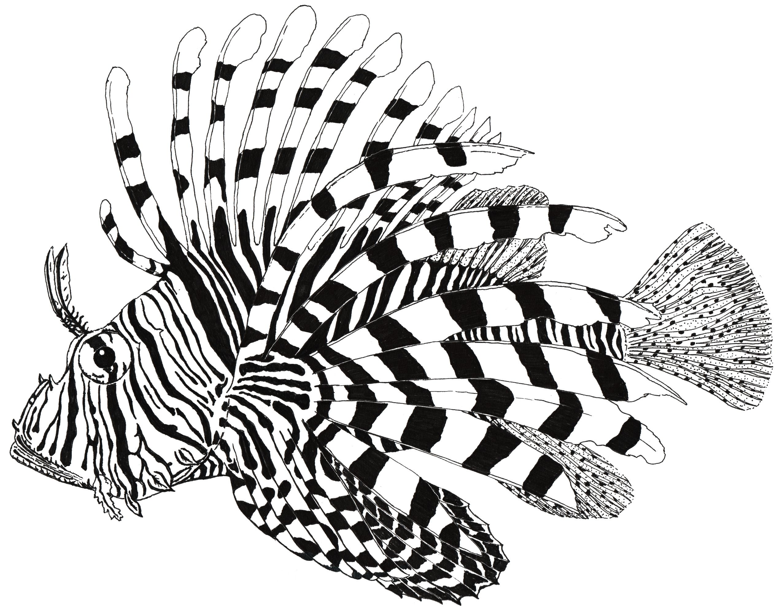 Line Art Of Fish : Lionfish drawing google search down stairs bathroom pinterest