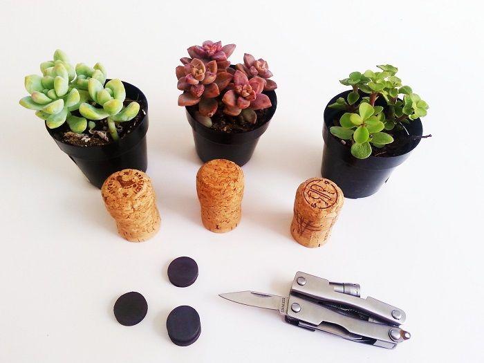 bouchon de li ge comme mini pot pour une plante succulente. Black Bedroom Furniture Sets. Home Design Ideas