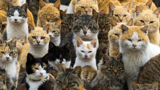Lots Of Cats Google Search Feral Cats Cute Cats Cat Island Japan