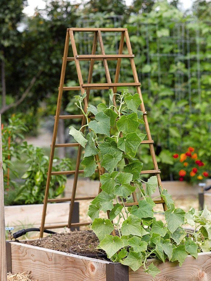 ▷ 1001 + idées pour aménager un jardin ou potager vertical