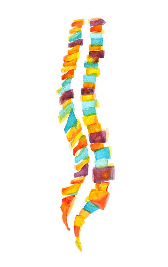Abstract Spine Watercolor Print, Vertebral Column Art, Spine Art ...