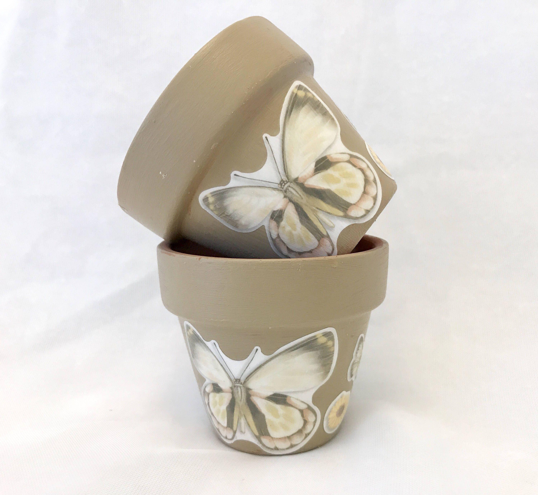 succulent gift box canada