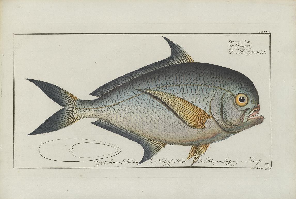 plates 217-324 - D. Marcus Elieser Bloch's, ausübenden Arztes zu Berlin ... Oeconomische Naturgeschichte der Fische Deutschlands ... - Biodiversity Heritage Library