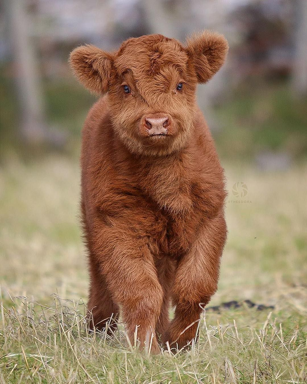 Pin by Tayyab Shafiq on Animals and pets | Pet cows, Cute ...