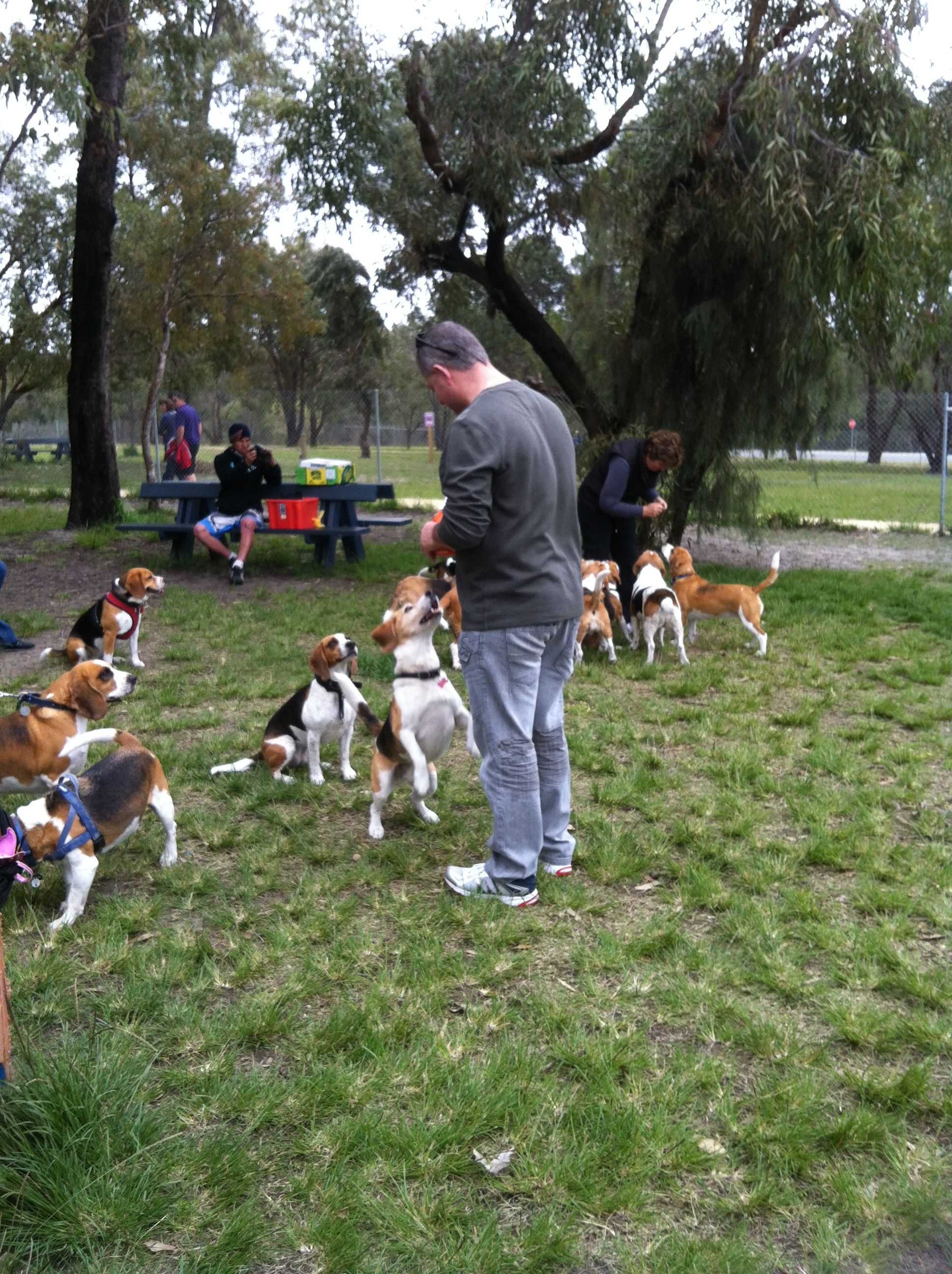 16++ Oak park animal shelter ideas in 2021