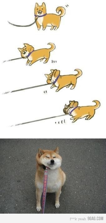I Know Its Not Just Mine C Doge OriginalFunny