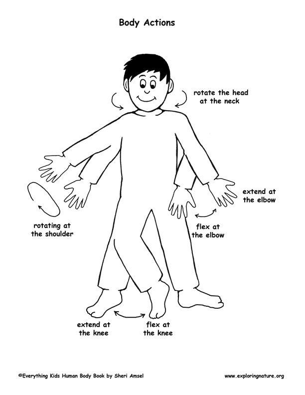 Kids Human Body Outline Harvard Wm Pinterest Human