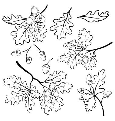 Oak branches with acorns outline vector by oksanaok - Image ...